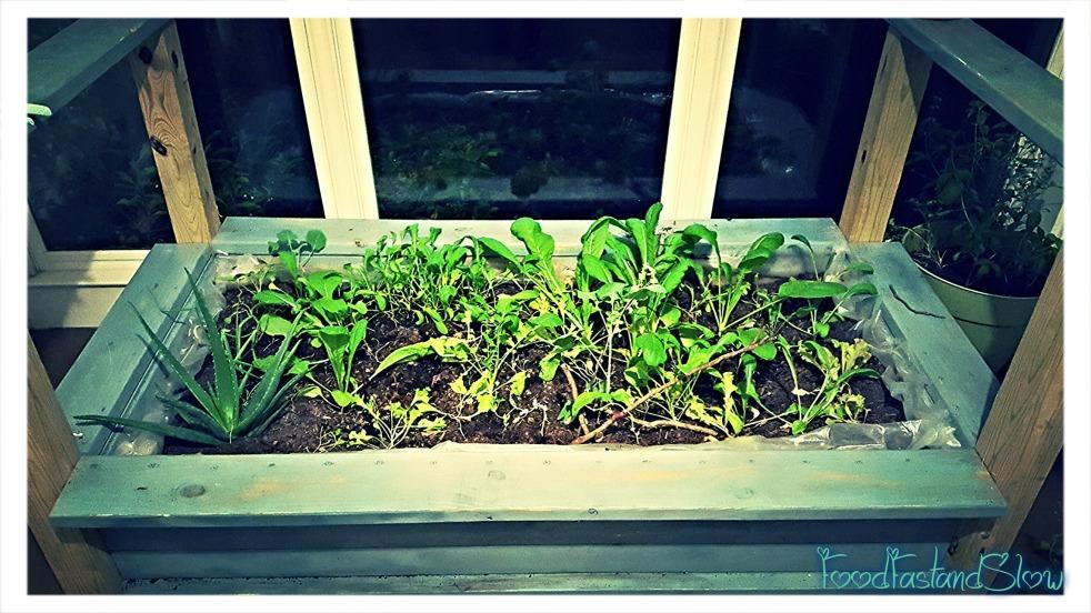 Indoor Garden Bed1